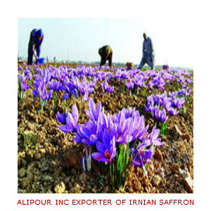 Saffron Production in 2019